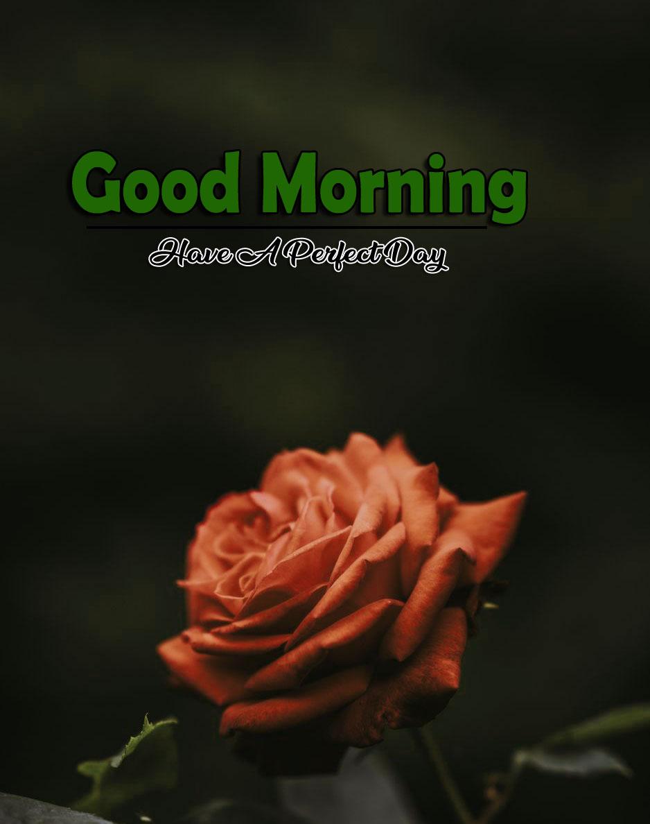 Best Flower 4k Good Morning Pics Free for Facebook