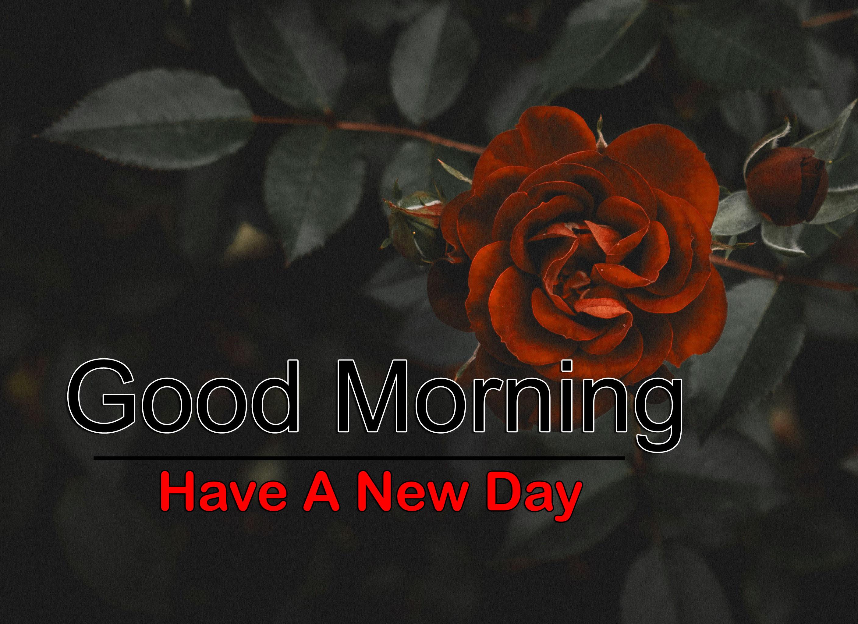 Best Flower 4k Good Morning Pics for Facebook