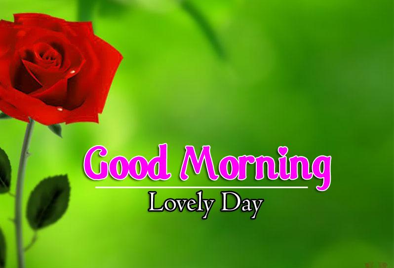 Best Flower 4k Good Morning Wallpaper For Facebook
