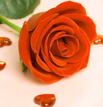 Best Flower For ProFile Images Free
