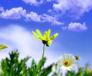 Best Flower For ProFile Photo Images
