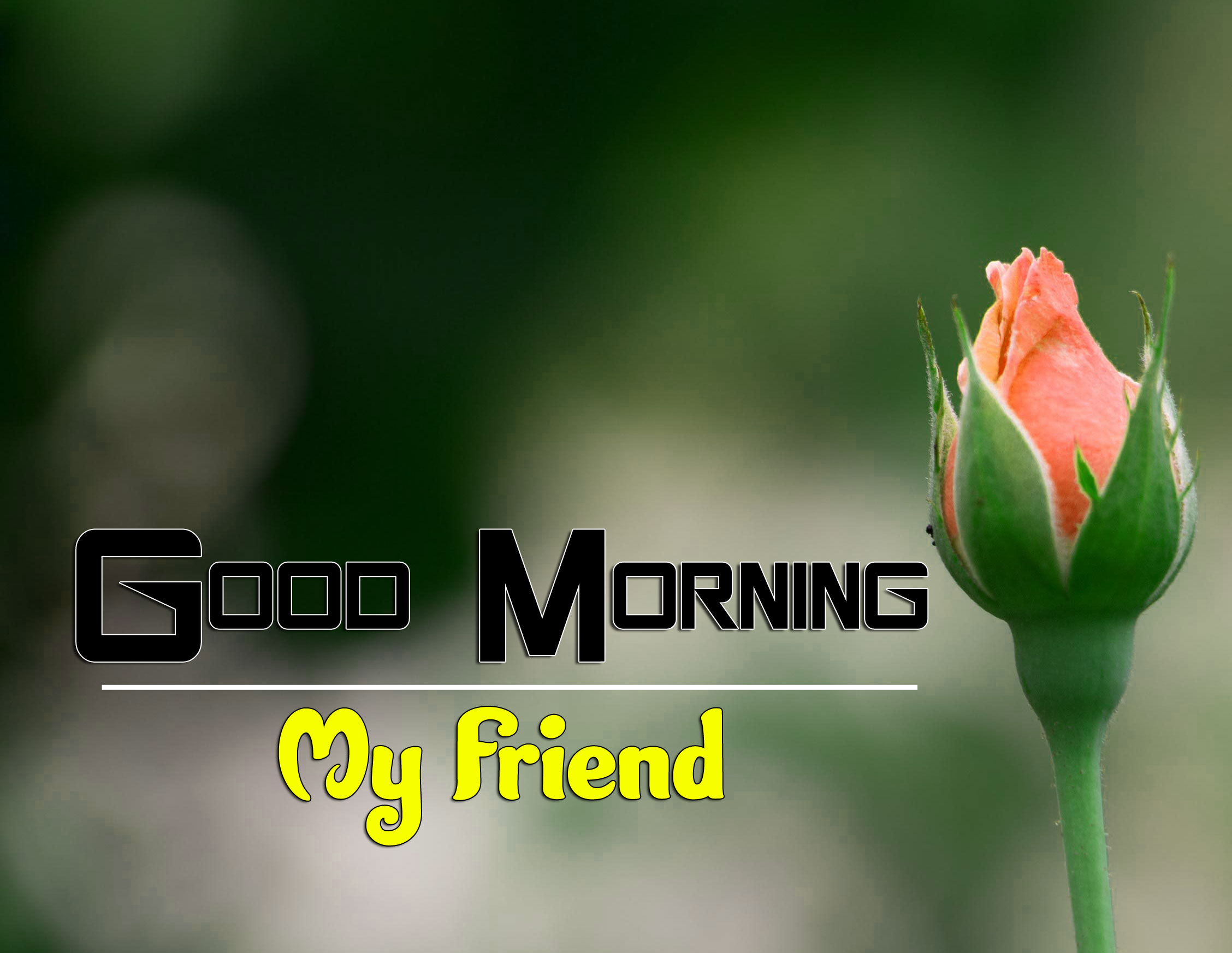 Best Good Morning Wishes 4k Images for Facebook
