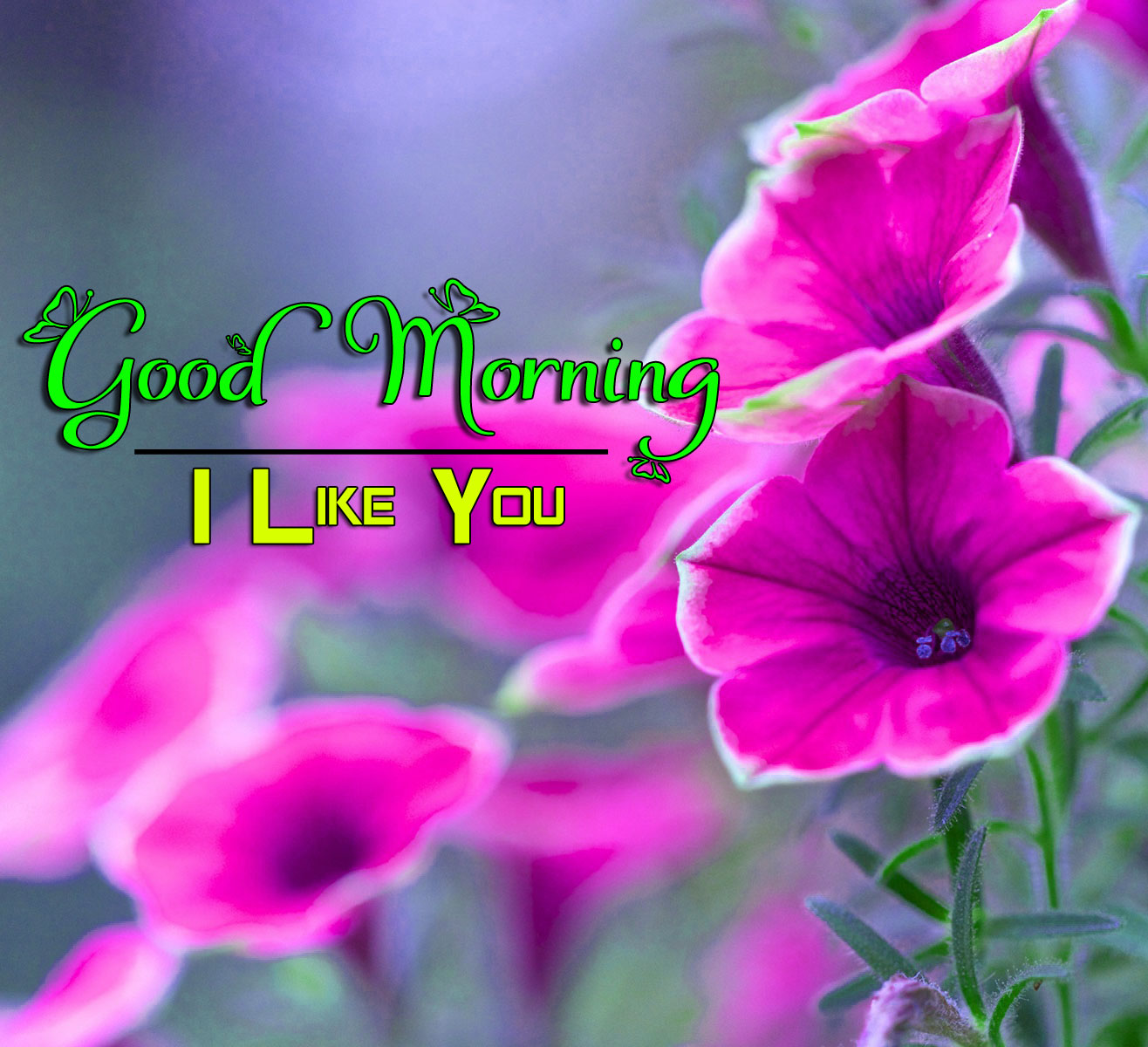 Best Good Morning Wishes 4k Images