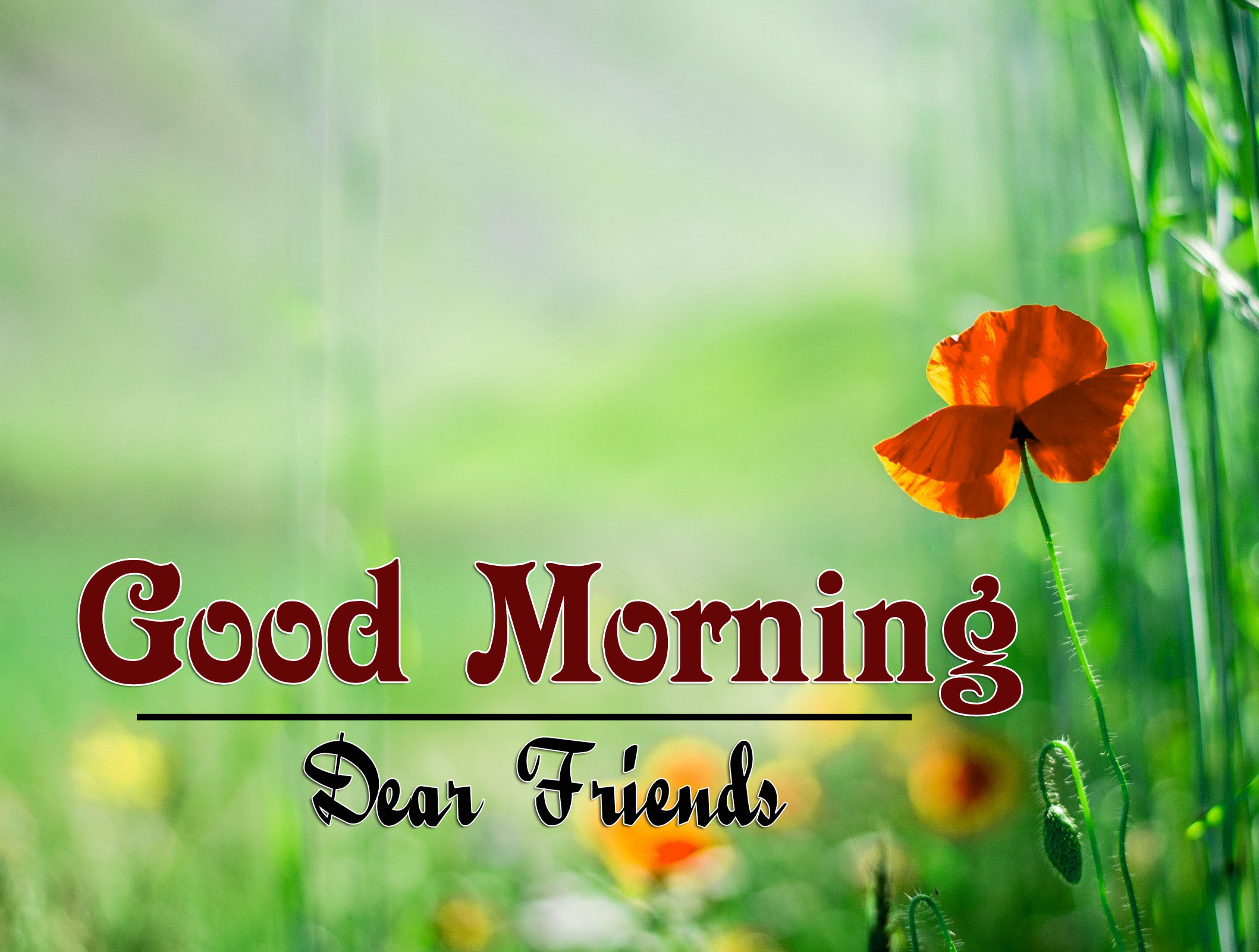 Best Good Morning Wishes 4k Photo Free Download