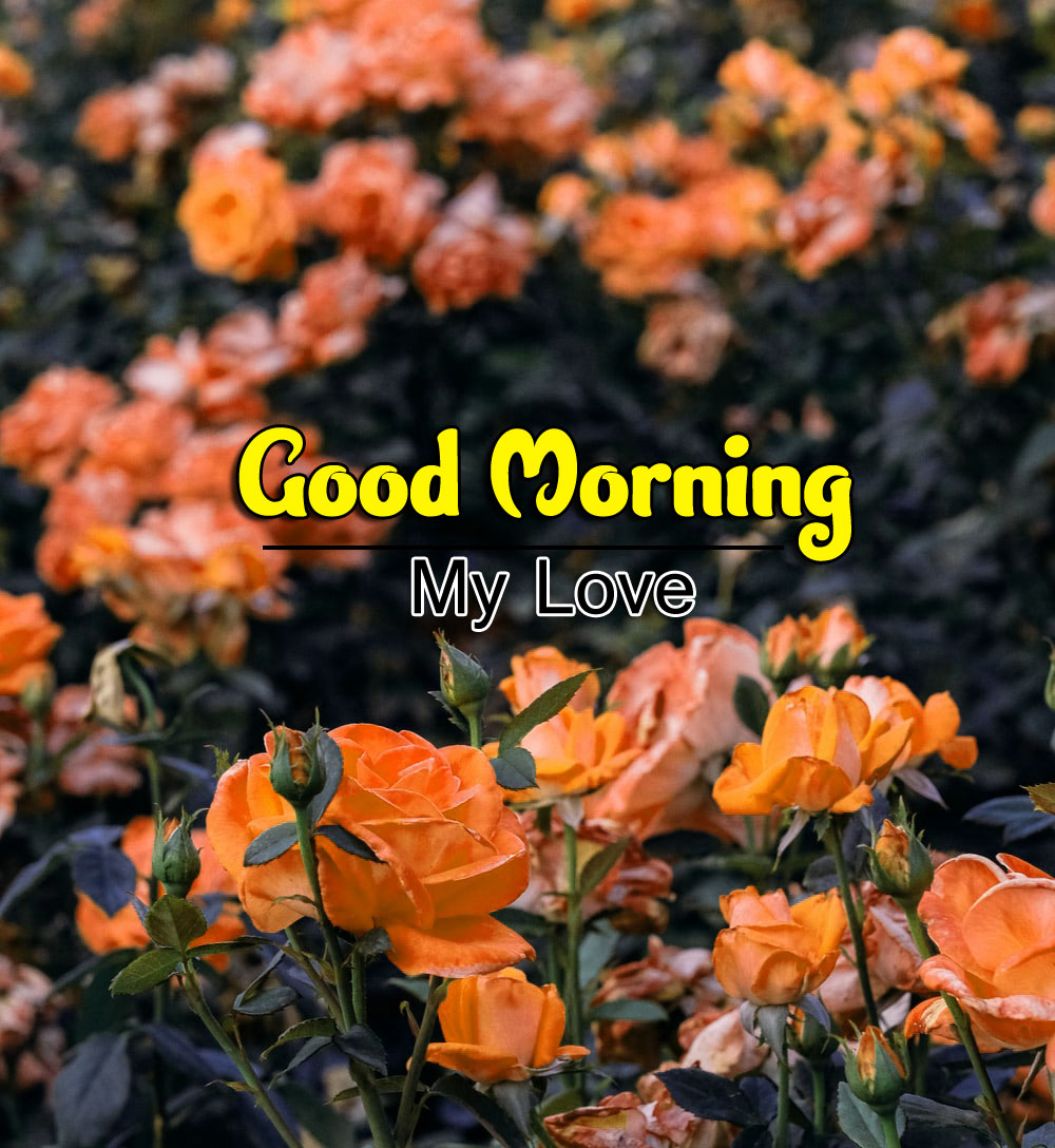 Best Good Morning Wishes 4k Pics Download Free 2