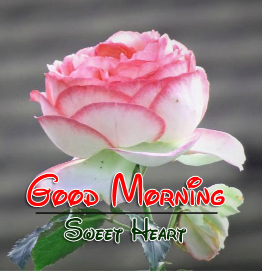 Best Good Morning Wishes 4k Pics Download Free 3
