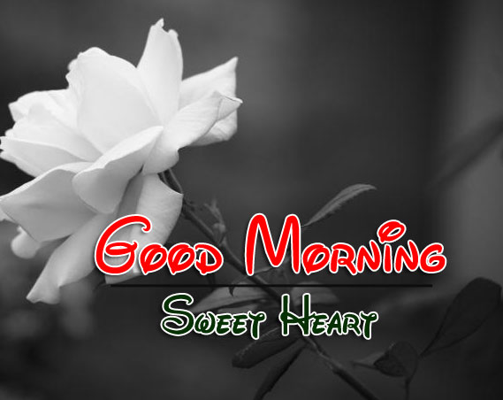 Best Good Morning Wishes 4k Pics Download Free