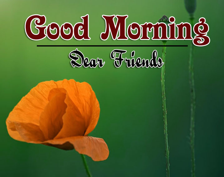Best Good Morning Wishes 4k Pics Wallpaper for Facebook