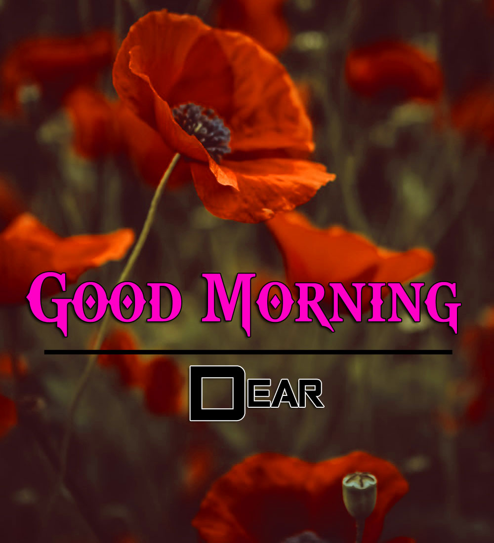 Best Good Morning Wishes 4k Wallpaper Free Download 2
