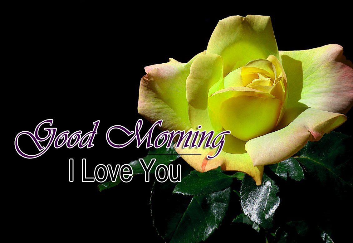 Best HD Good Morning Wishes Photo New Download