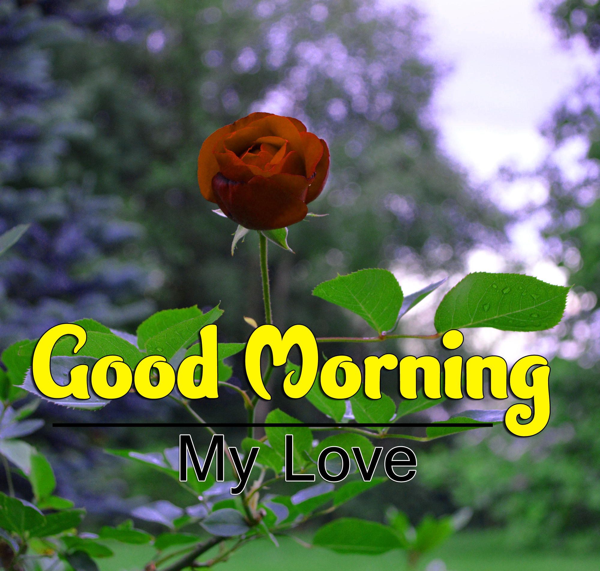 Best HD Good Morning Wishes Pics Free Download