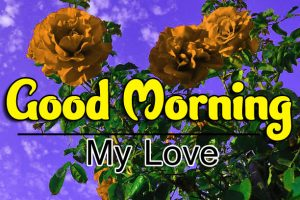 689+ Attractive Fresh Good Morning Images Download