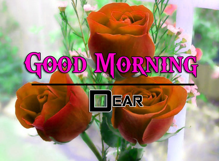 Best HD Good Morning Wishes Pics With Red Rose
