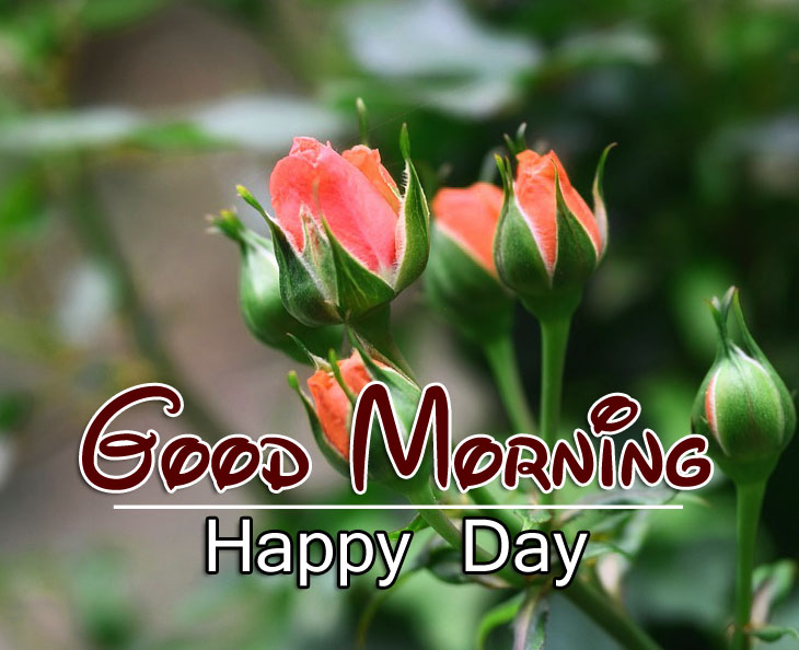 Best HD Good Morning Wishes Wallpaper