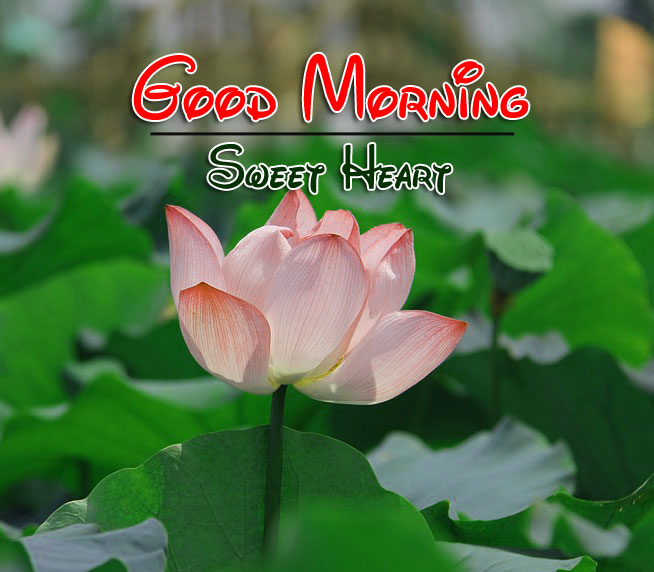 Best New Beautiful Good Morning Wishes Images
