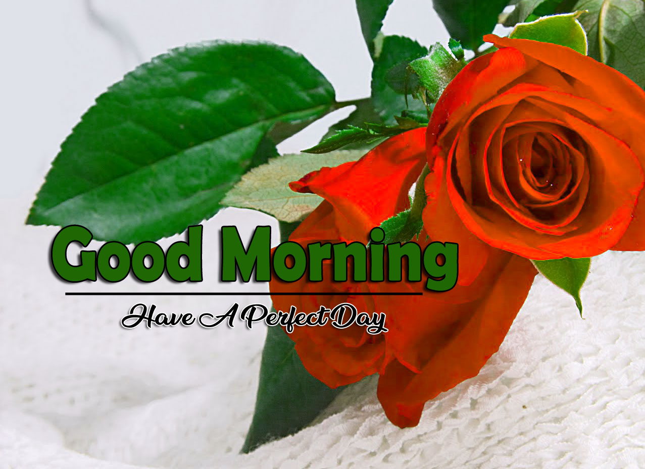 Best New Flower 4k Good Morning Images for Facebook