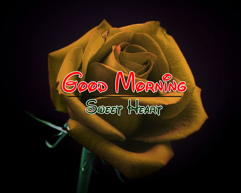 Best Quality Good Morning Pics Images Download