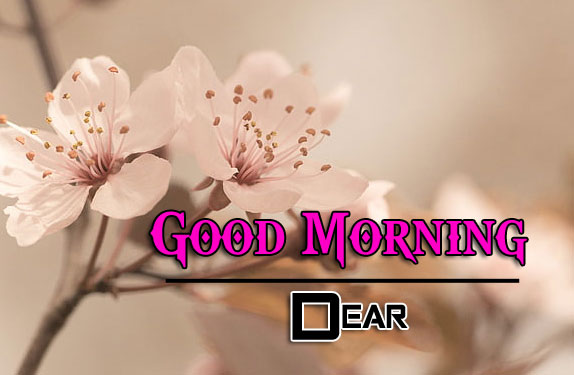 Best Quality Good Morning Wishes 4k images Download
