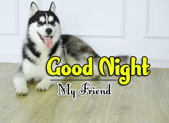 Dog Full HD Good Night Pics Images Download
