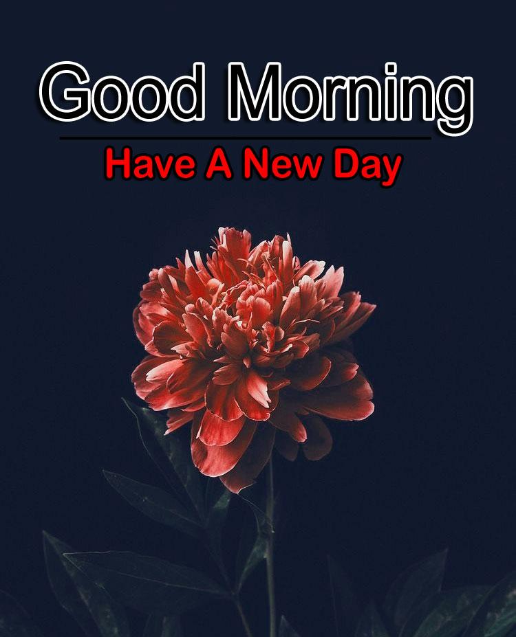 Flower 4k Good Morning Images Pics Free