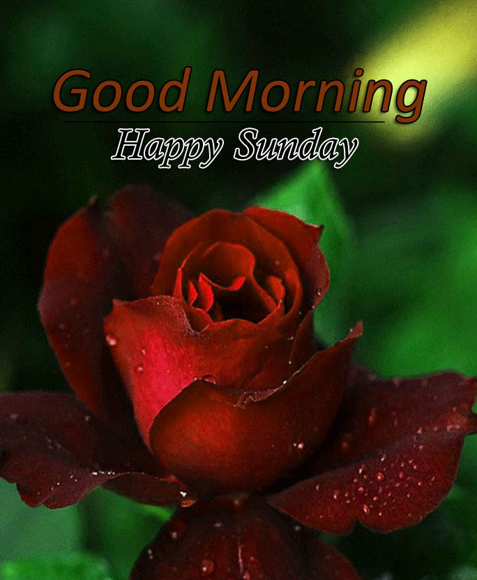 Flower 4k Good Morning Images Pics for Facebook