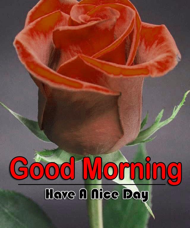 Flower 4k Good Morning Images for Whatsapp