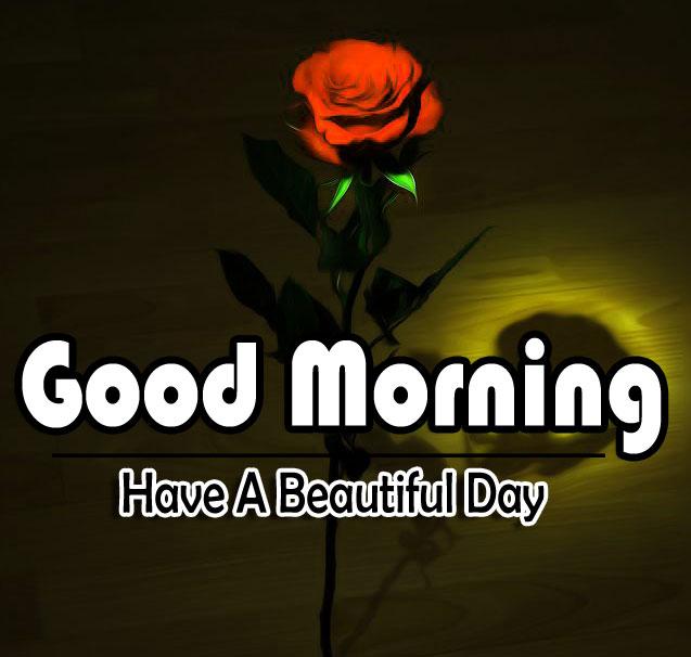 Flower 4k Good Morning Photo Download 2