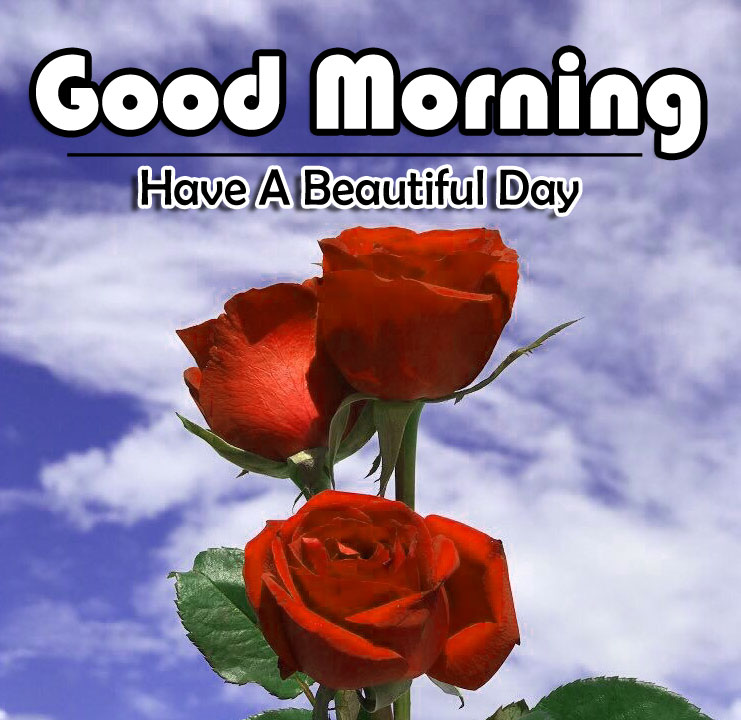 Flower 4k Good Morning Photo Download 3