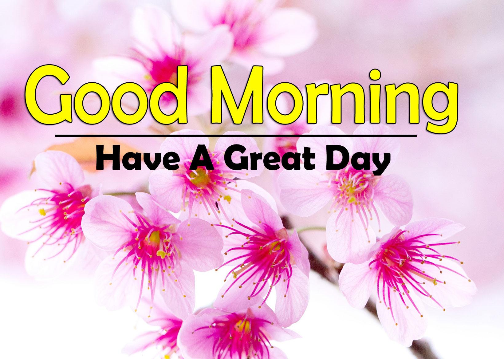 Flower 4k Good Morning Photo Download 4