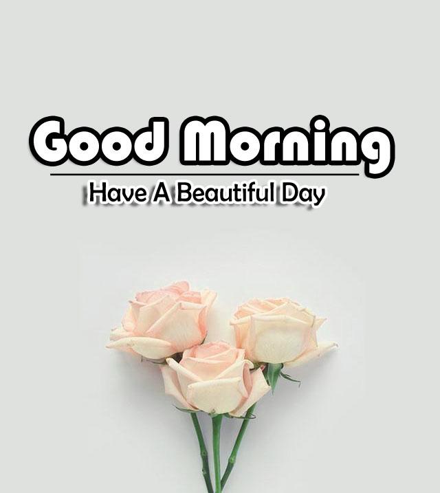 Flower 4k Good Morning Photo Download 5
