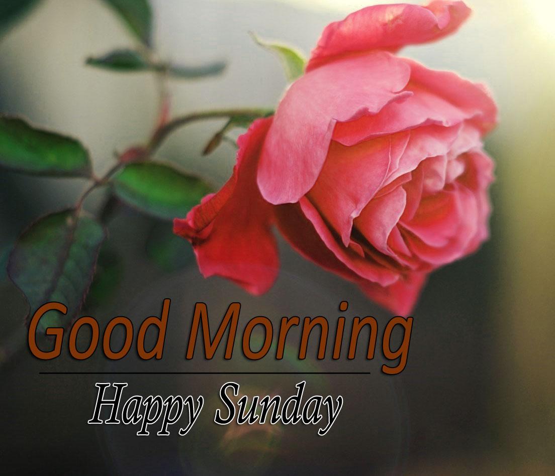 Flower 4k Good Morning Photo Download Free