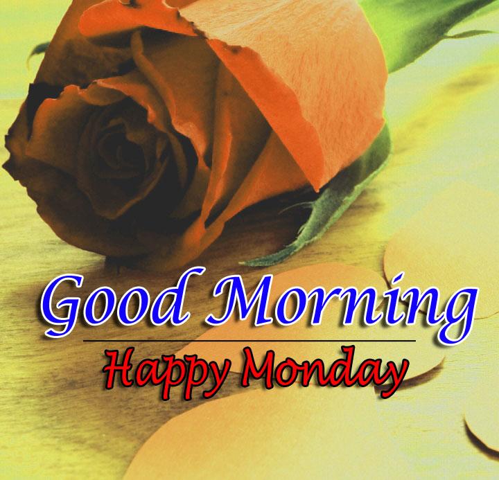 Flower 4k Good Morning Photo Download