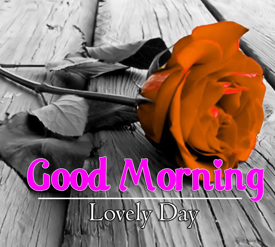 Flower 4k Good Morning Photo for Facebook