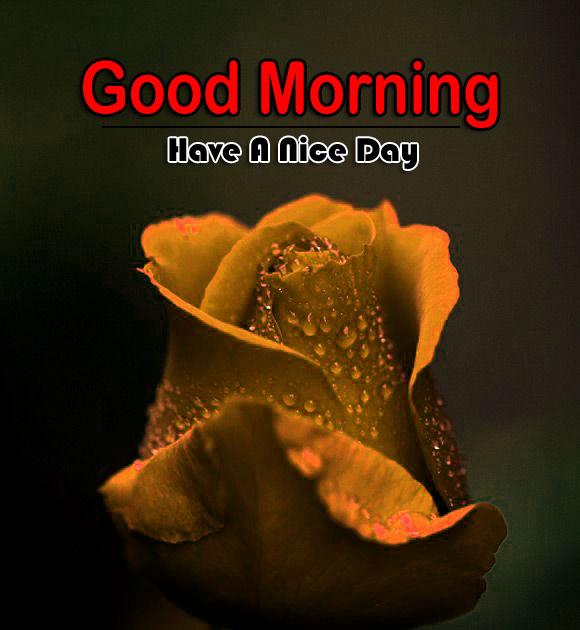 Flower 4k Good Morning Pics Download 2