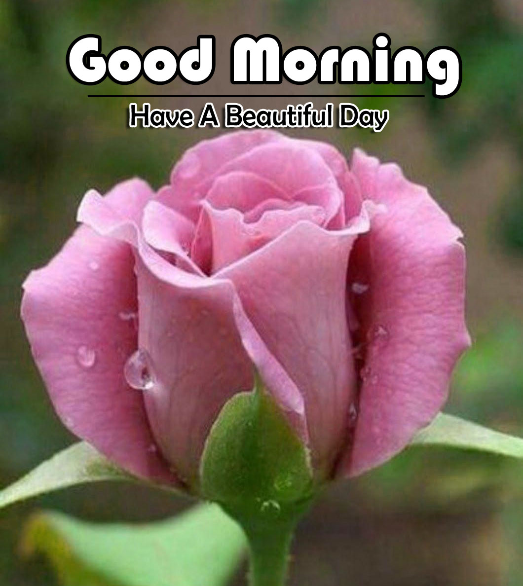 Flower 4k Good Morning Pics Download Free 2