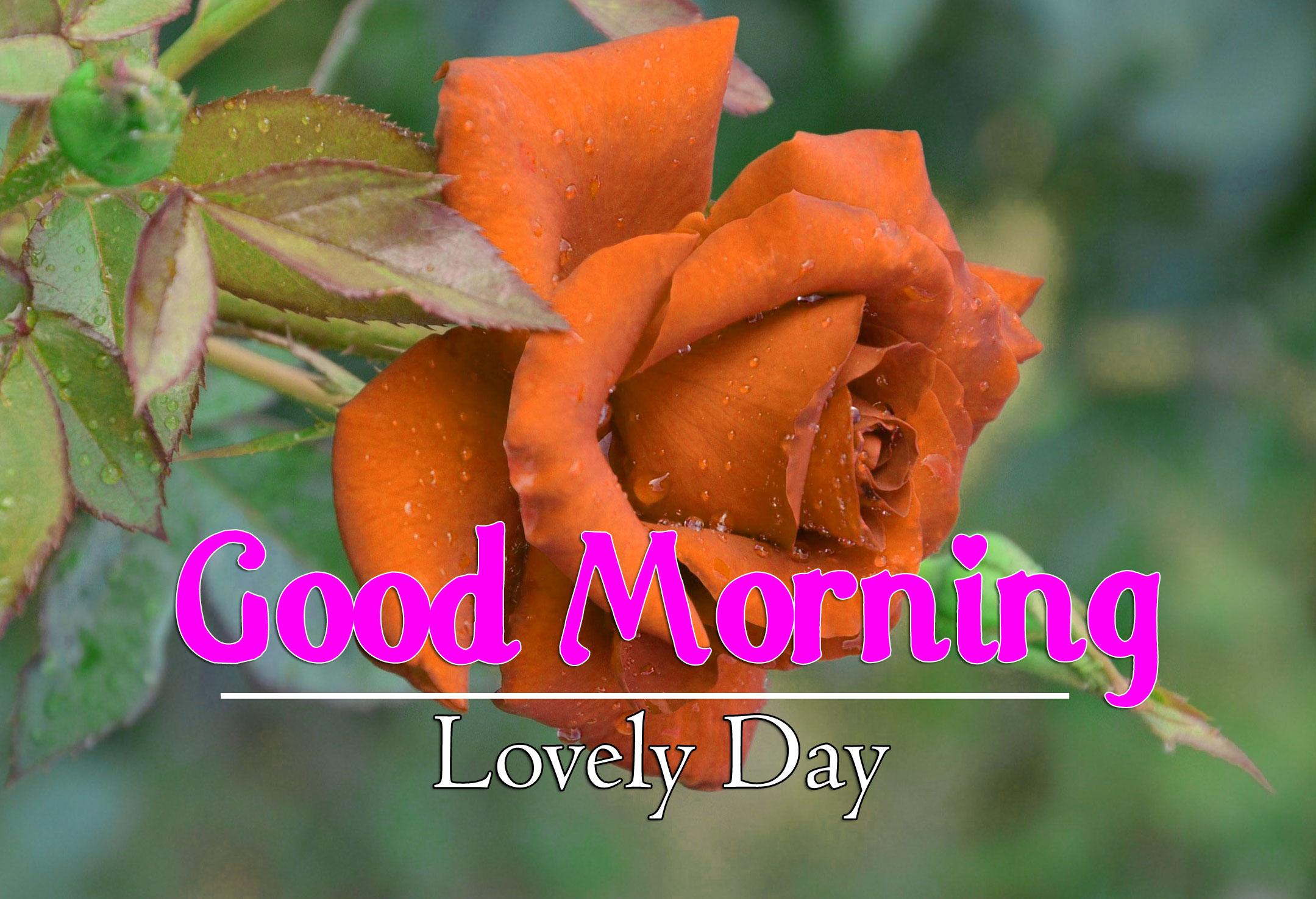 Flower 4k Good Morning Pics Free Download 3