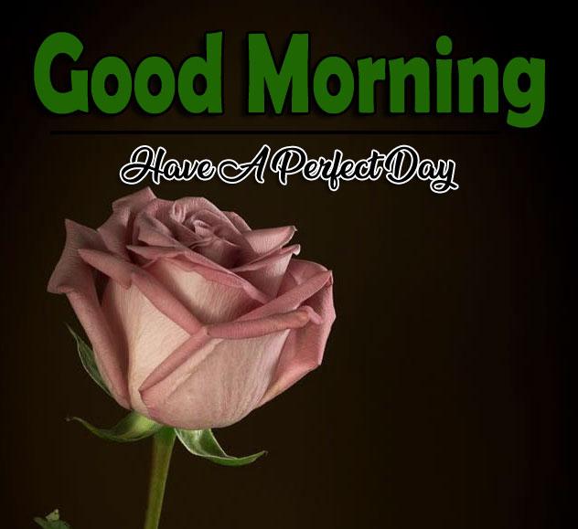 Flower 4k Good Morning Pics Free Download 4
