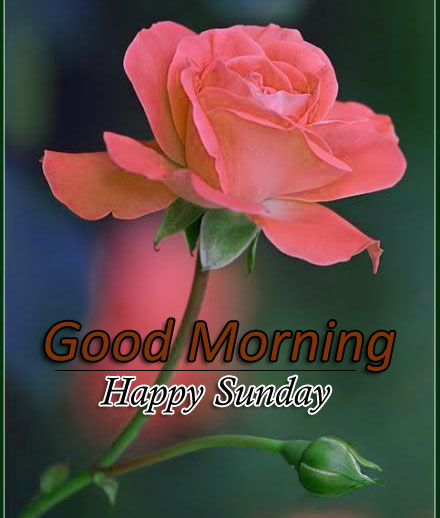 Flower 4k Good Morning Pics Free Download 5