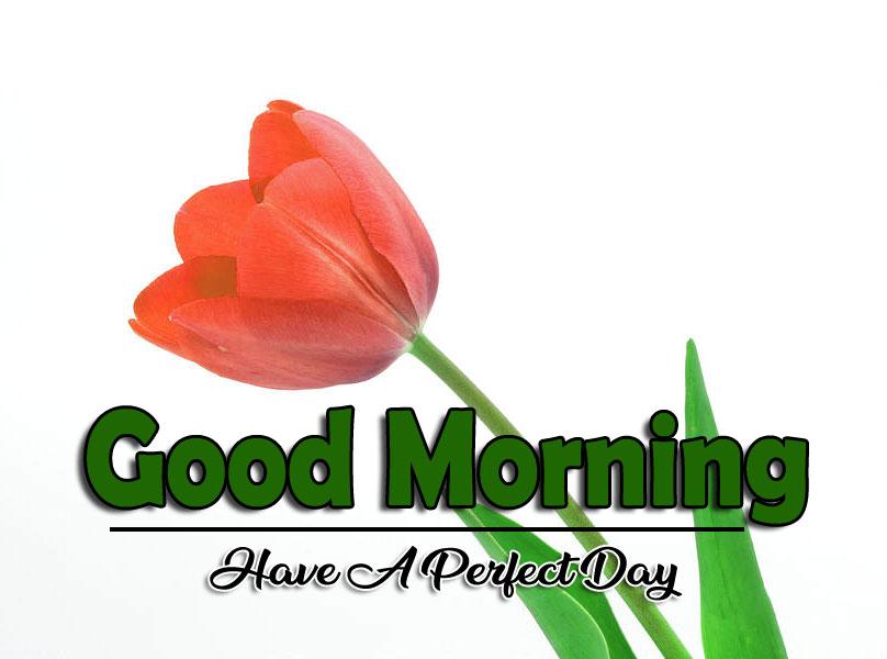 Flower 4k Good Morning Pics Free Download