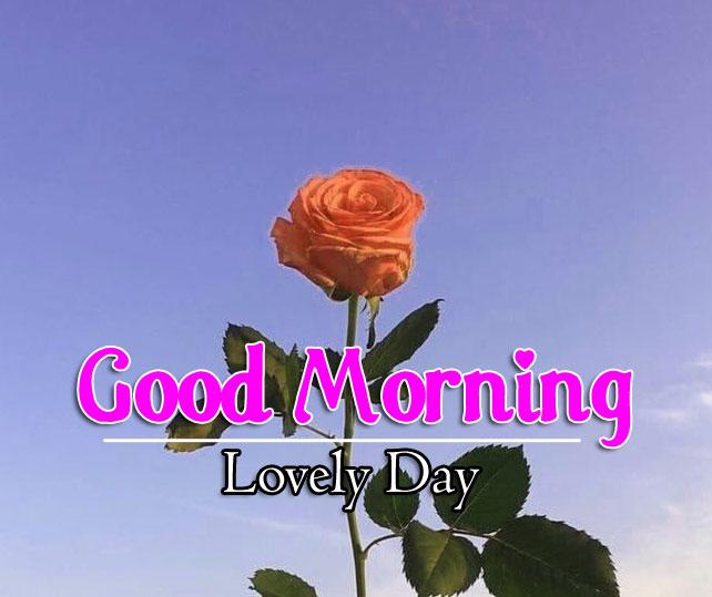 Flower 4k Good Morning Pics Free New
