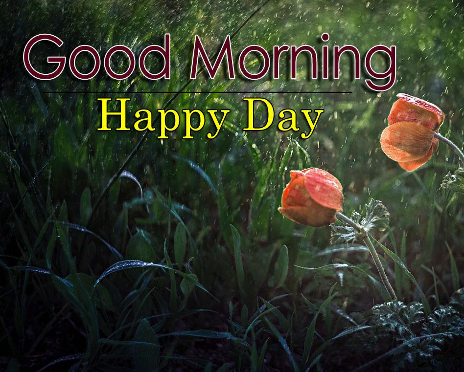 Flower 4k Good Morning Pics Free for Facebook