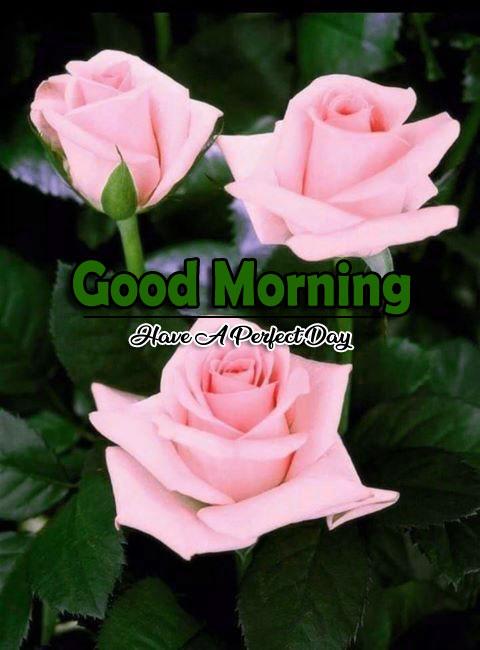 Flower 4k Good Morning Pics Wallpaper HD