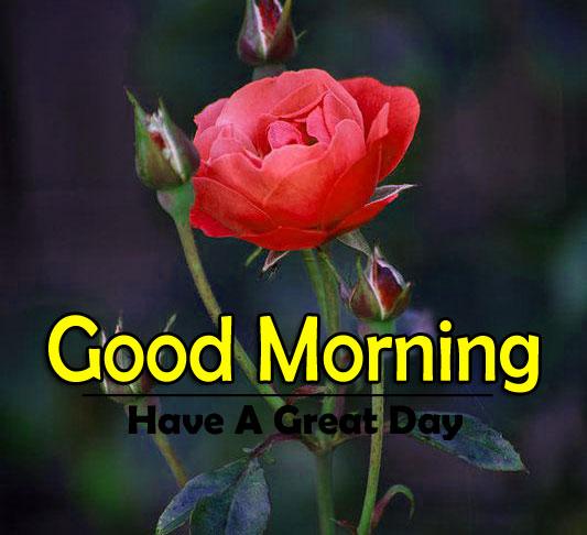 Flower 4k Good Morning Pics for Facebook 2