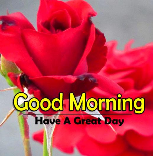 Flower 4k Good Morning Pics for Facebook