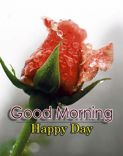 Flower 4k Good Morning Wallpaper Download 3