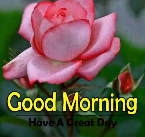 Flower 4k Good Morning Wallpaper New Download