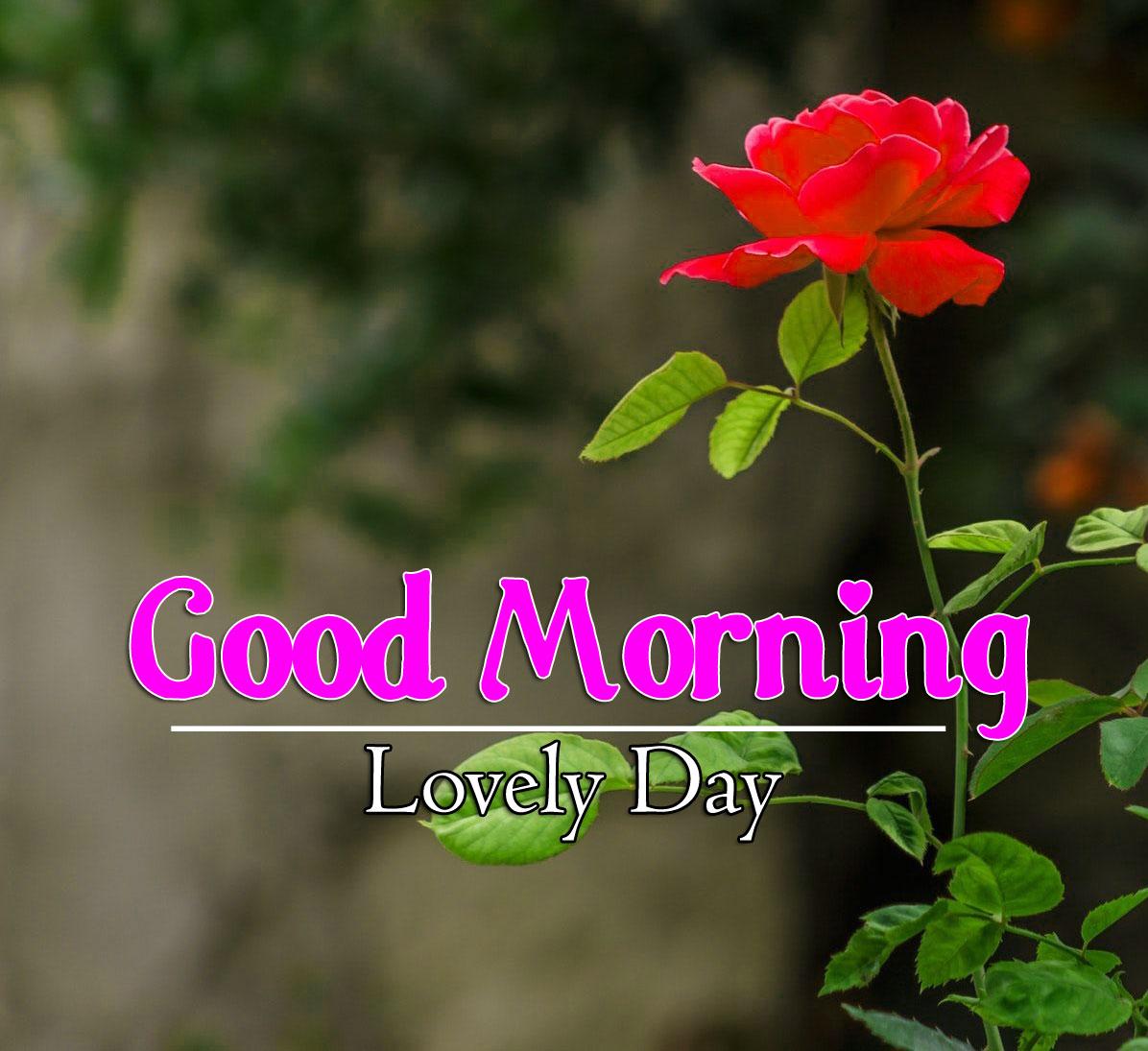 Flower 4k Good Morning Wallpaper Pics Download