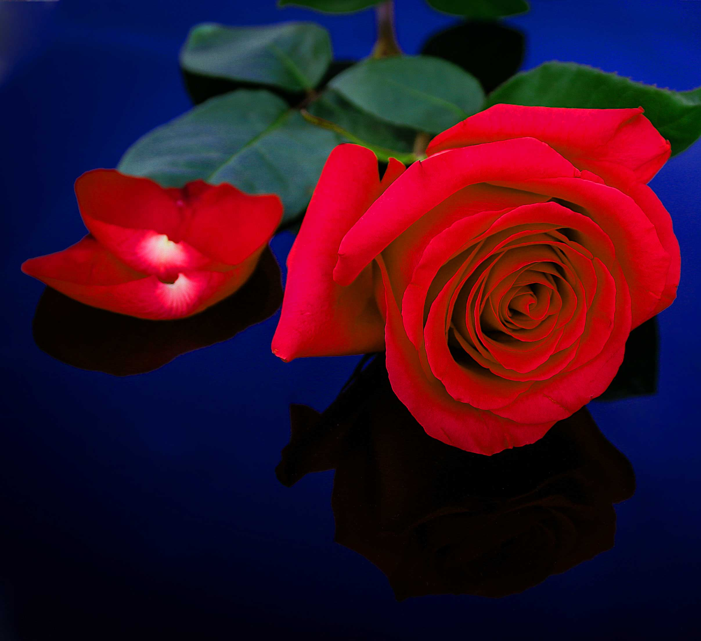 Flower For ProFile Images Hd