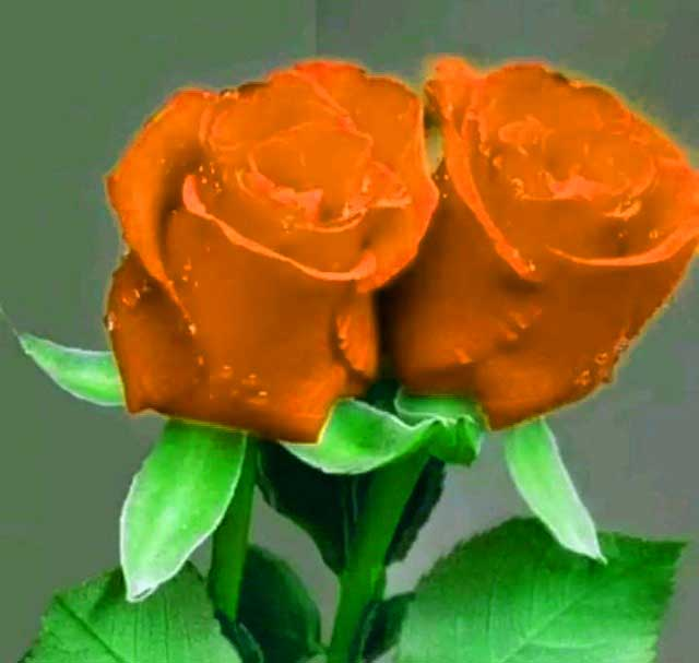 Flower For ProFile Photo Hd