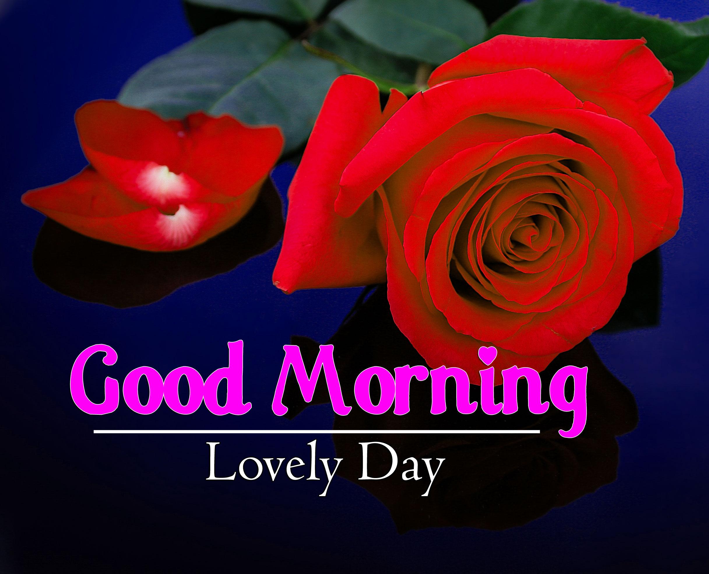 Free Best Flower 4k Good Morning Wallpaper In HD